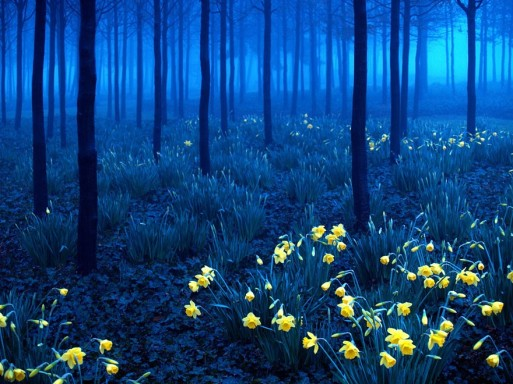black forest -germany