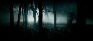 801px-Dark_forest